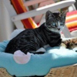 cat97