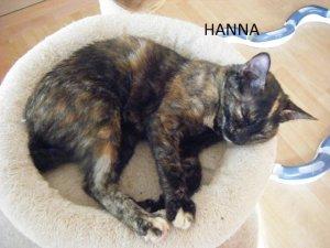 2014-09-09-hanna-(5)