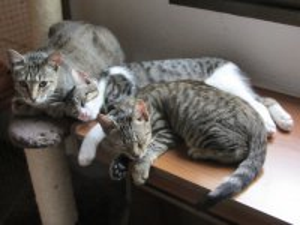 milkywayund-kitten