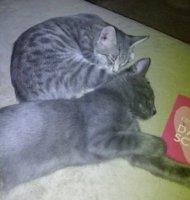 Selina & Stella1